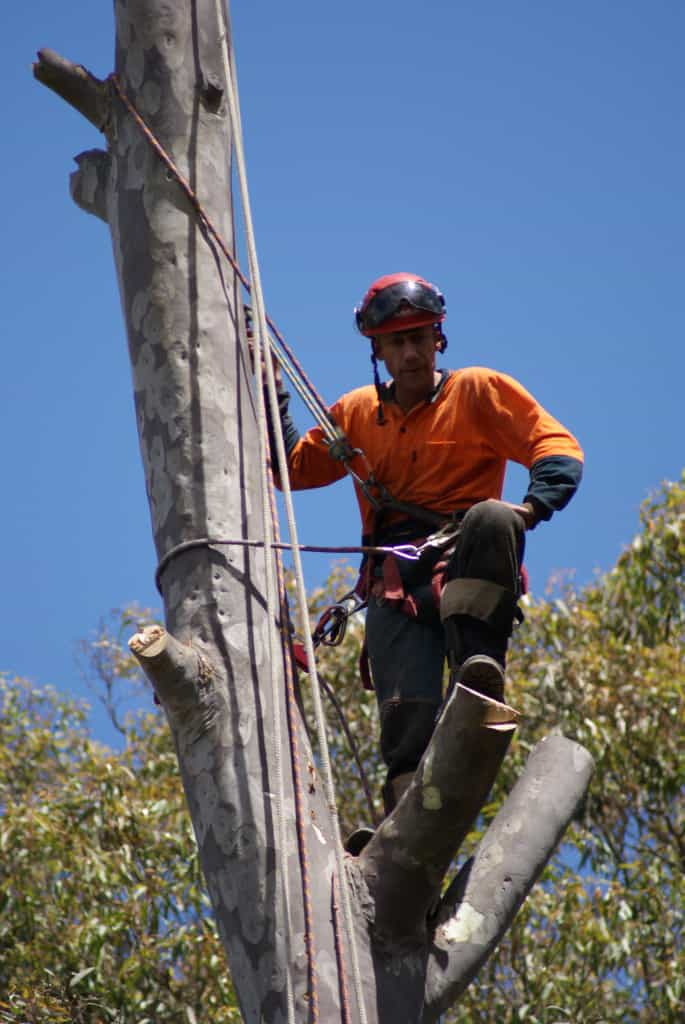 Canopy Tree Pty Ltd