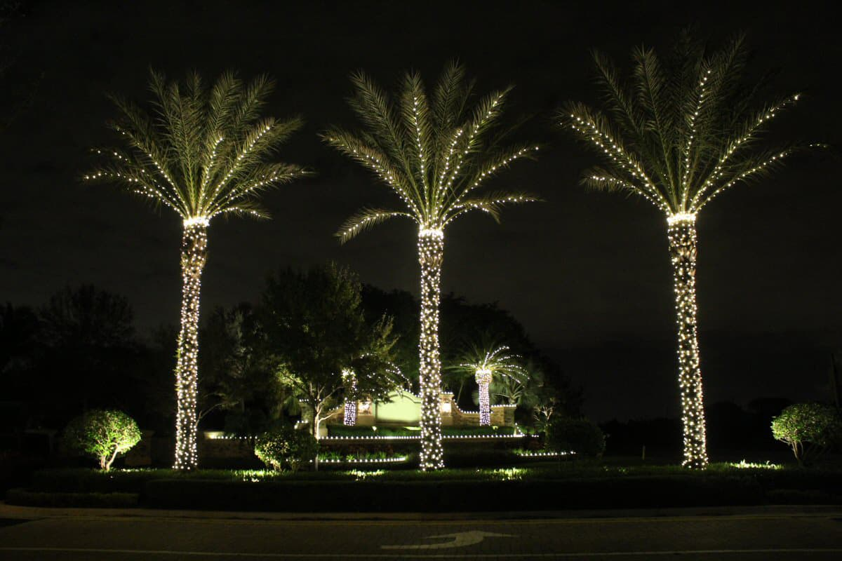 INSTALLATION OF TREE LIGHTS