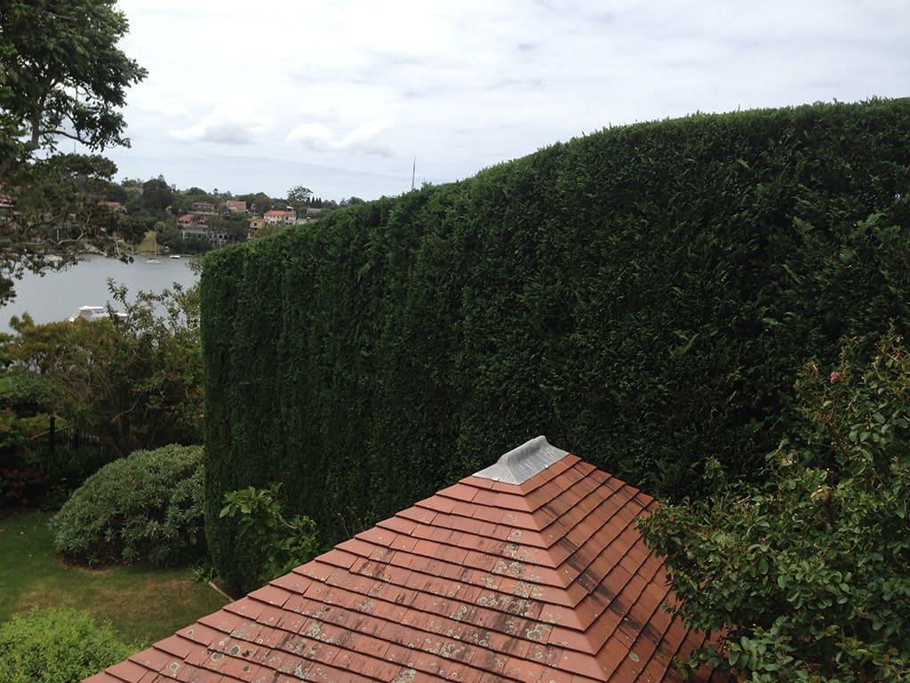 Hedge Trimming Sydney