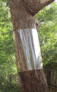 Possum Barriers & Netting on Trees