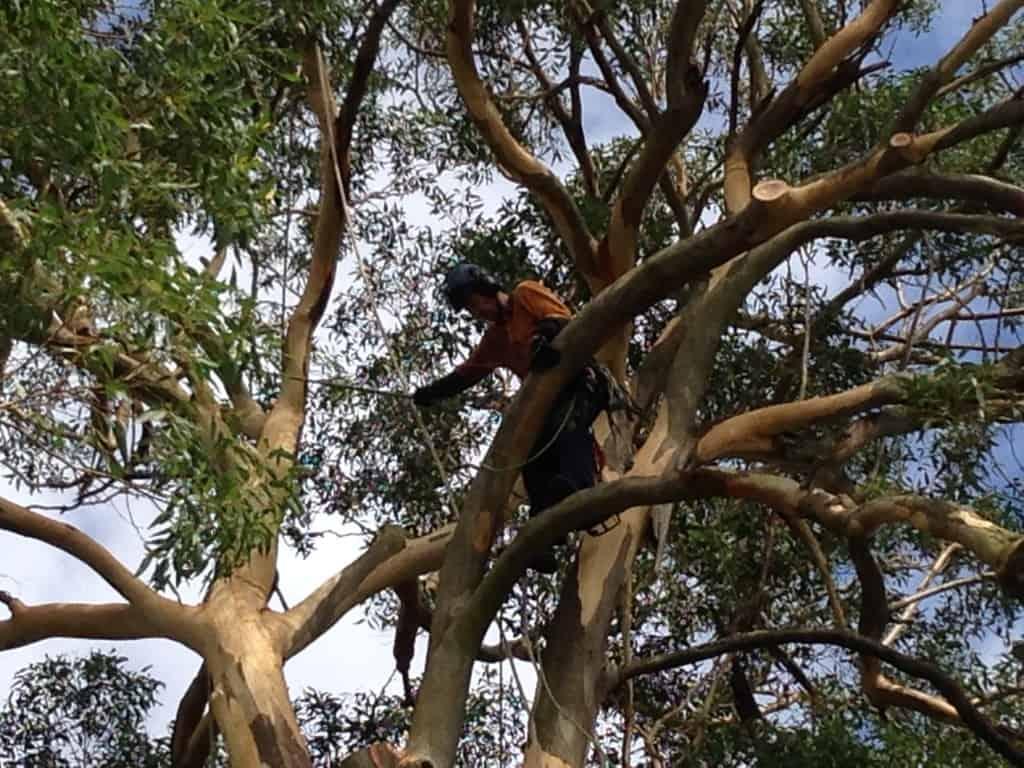 Branch Removal Sydney