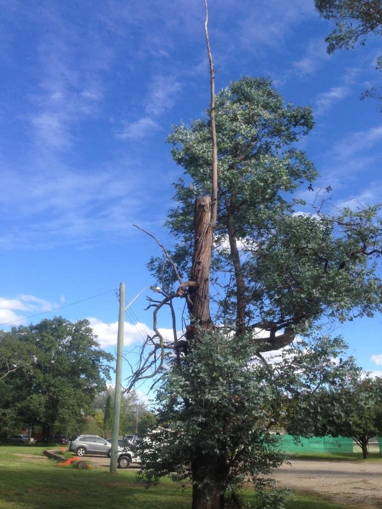 Tree Hazard & Risk Assessment