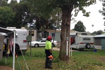 Tree Maintanance Caravan Park
